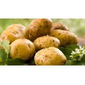Patate italiane