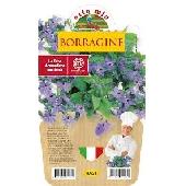 BORRAGINE  - Piantina aromatica in vaso 14  - Orto mio
