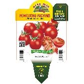 Pomodoro a Ciliegia pachino  - Orto mio