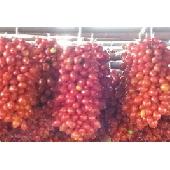 """Tomaten """"Piennolo del Vesuvio"""" g.U."""