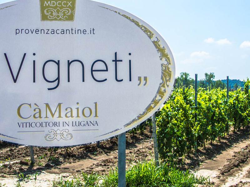 """Cà Maiol: Der Wein """"Lugana"""""""
