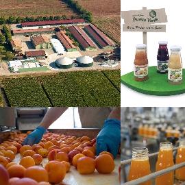 Succhi di Frutta FrullaBio 80% Frutta... 100% Gusto! Solo frutta Bio... frullata e pronta da bere.