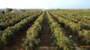 Hochwertige Produkte der Valli Trapanesi - Natives Olivenöl Extra DOP