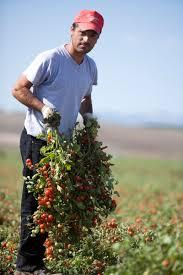 Pomodorini Prunilli Pelati in Passata di Pomodoro
