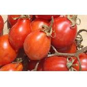 �Pomodorino del Vesuvio D.o.p.� freschi sciolti