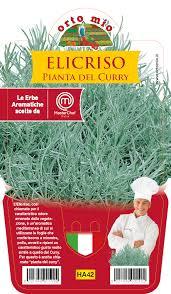 Elicriso o pianta del curry piantina in vaso da 14 cm for Orto mio vendita online