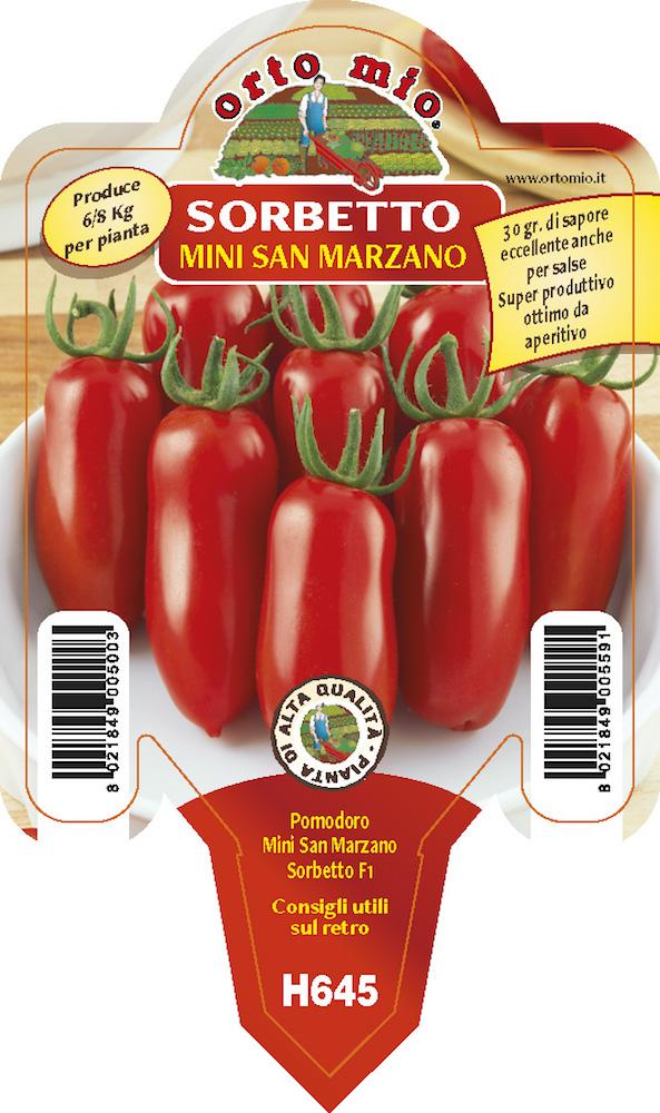 Pomodoro Datterino mini San Marzano - Orto mio